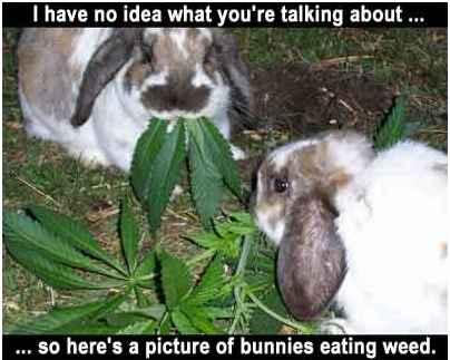 bunniesweed.jpg