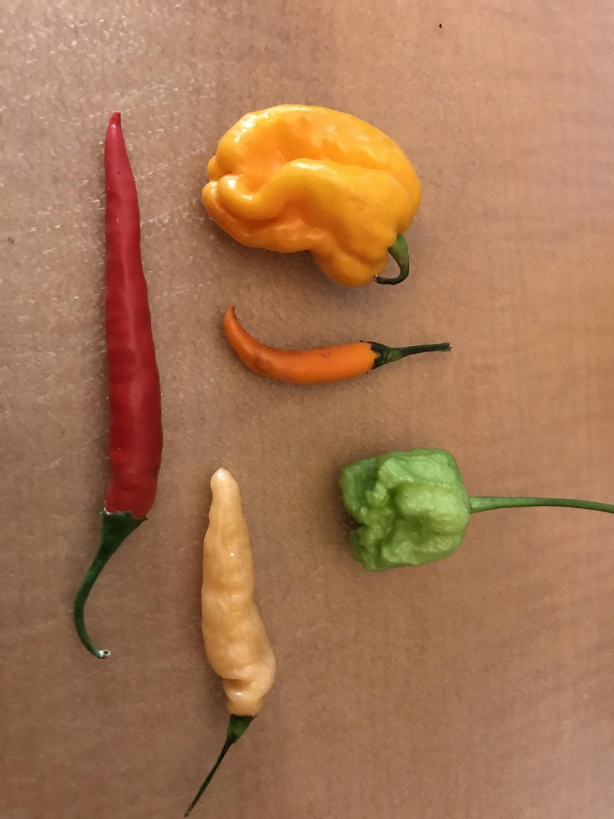 Moar peppers....jpg