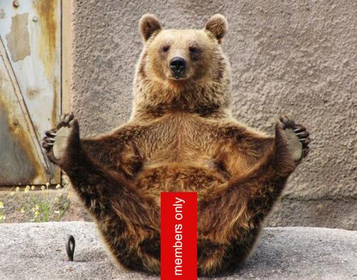 porn-bear.jpg